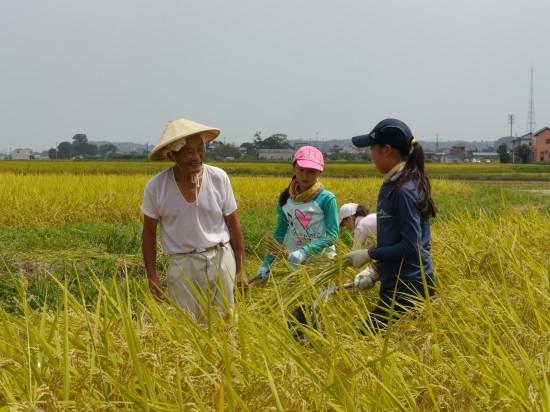 稲刈り女子と椿さん